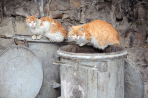 Two Stray Cats on Garbage Bins