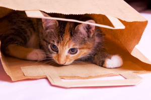 shopping kittenthree colored striped lying in paper bag