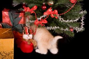 Christmas tail