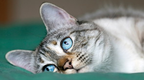 Cats International Facts About Cats