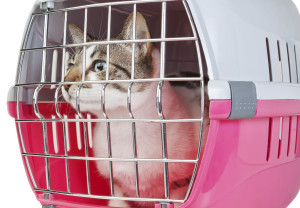 Pet cat trapped in a cage for a veterinarian.