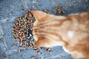 Abandoned street cat eating food.