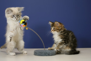 Kittens at play