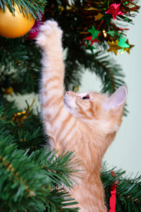 Kitten and the christmas tree